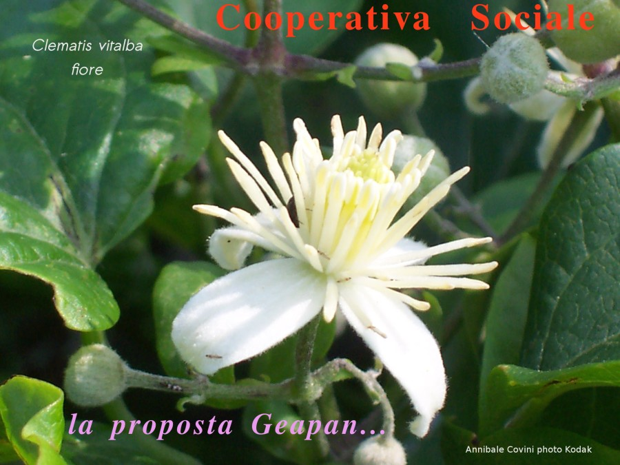 Cooperativa Sociale Agricola Geapan